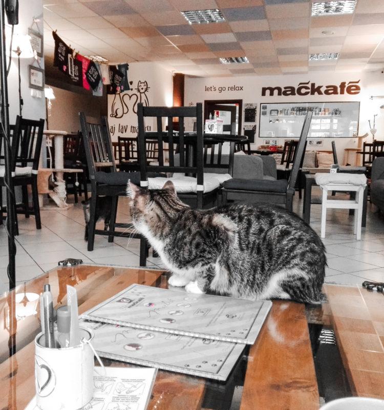 mačkafé